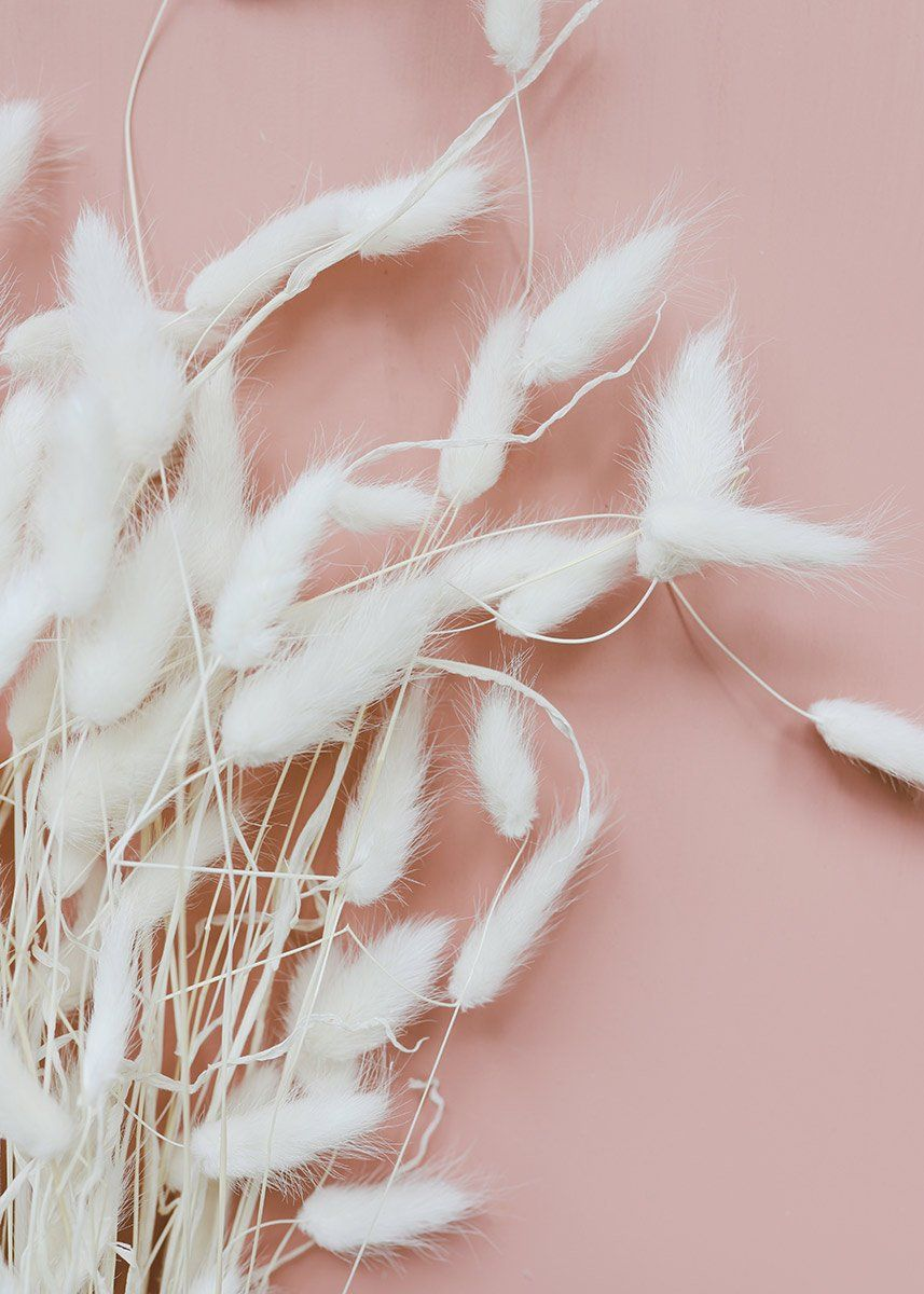 Dried White Bunny Tail