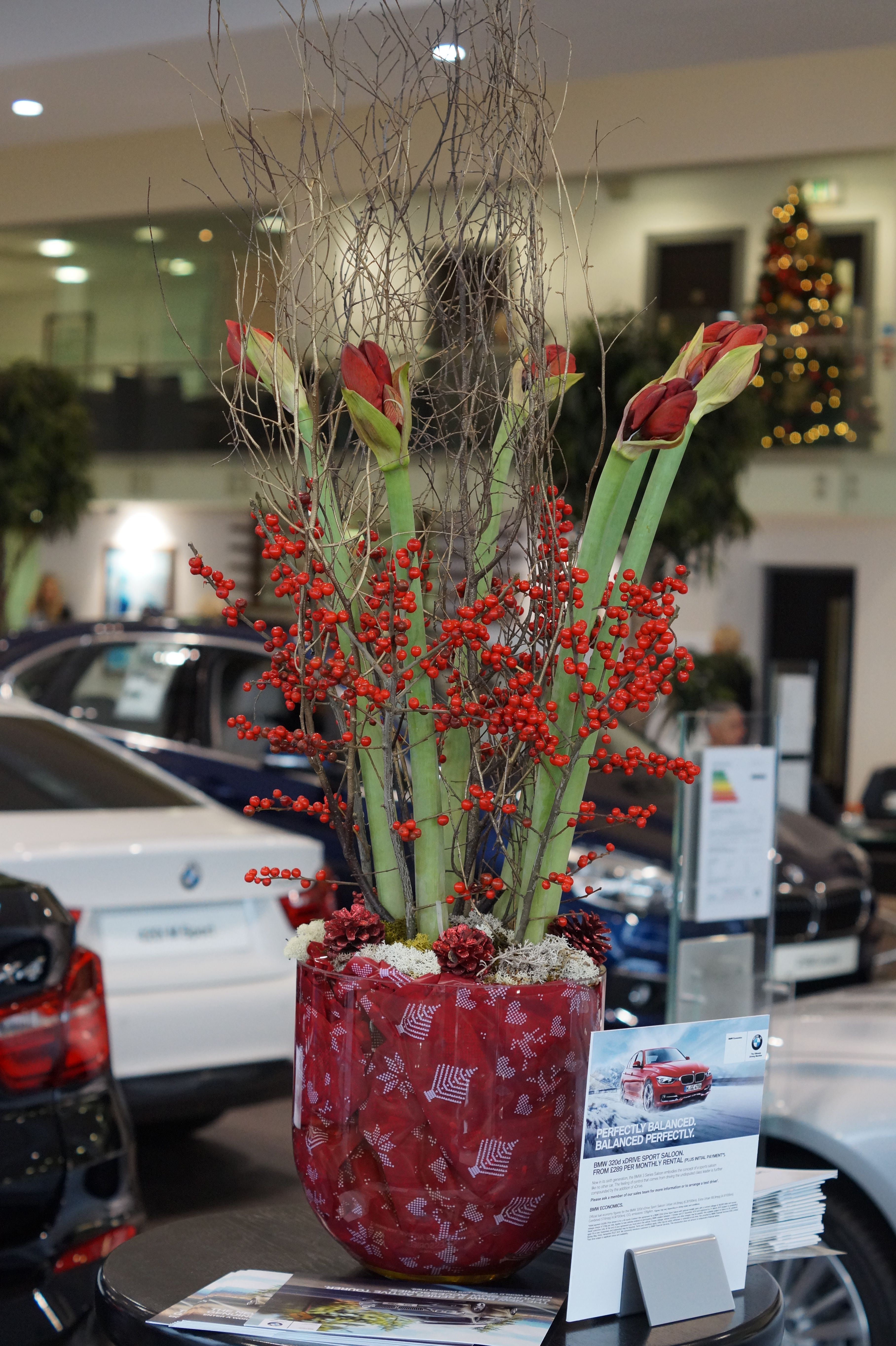 A Christmas arrangement using red amaryllis, ilex berries