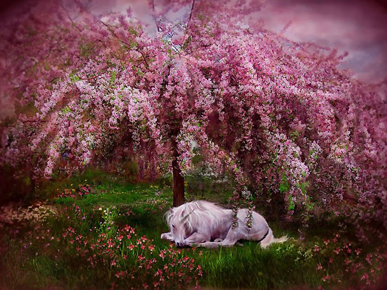 Unicorn Under Cherry Blossom Tree Unicorn Art Dream Art Posters Art Prints