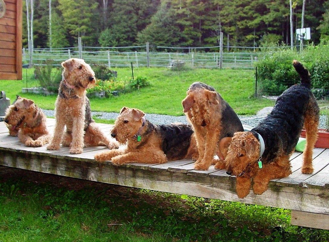 Dog Grooming Golden Retriever Saleprice 45 Dog Breeds Best Dog Toys Best Dog Breeds