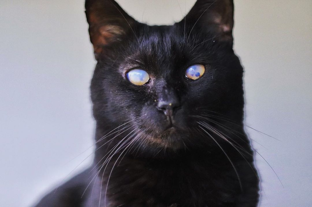Meet The Stunning Blind And Deaf Cat Who Helped His Mom Heal After She Lost Her Beloved Feline Friend Feline Cats Cat Rescue