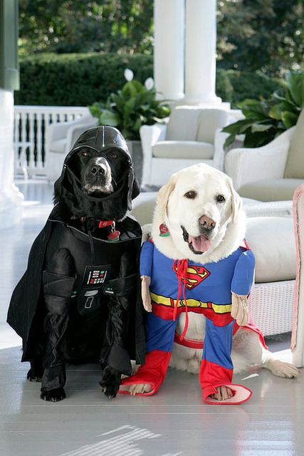 Large Dog Halloween Costumes That Are Awesome Original Dog
