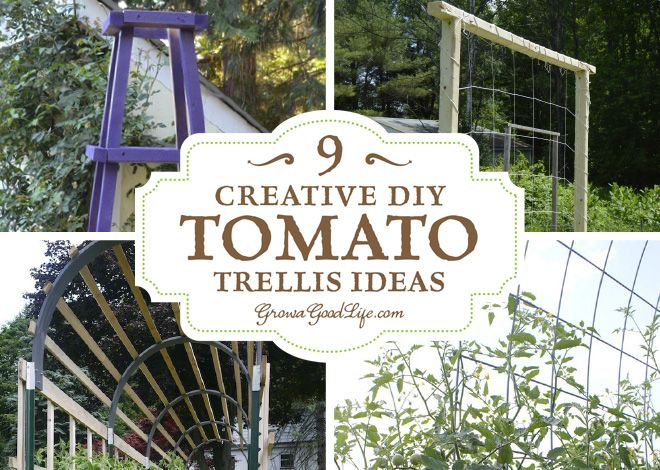 Superior A Tomato Trellis Is A Freestanding Structure That Is Used To Support The  Sprawling Vines And