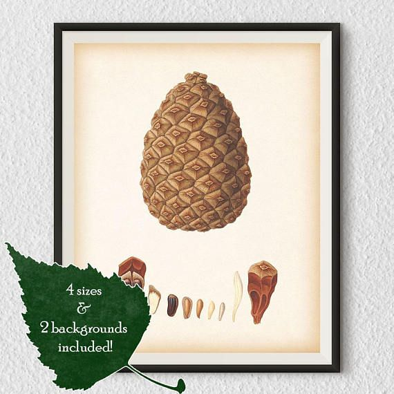 Pine cone print Pine cone wall art Winter wall art | Botanical ...