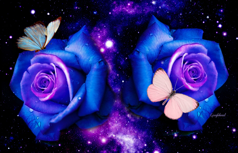 Roses Butterflies Desktop Background Wallpapers Hd Free 521531 Blue Roses Wallpaper Butterfly Background Butterfly Wallpaper