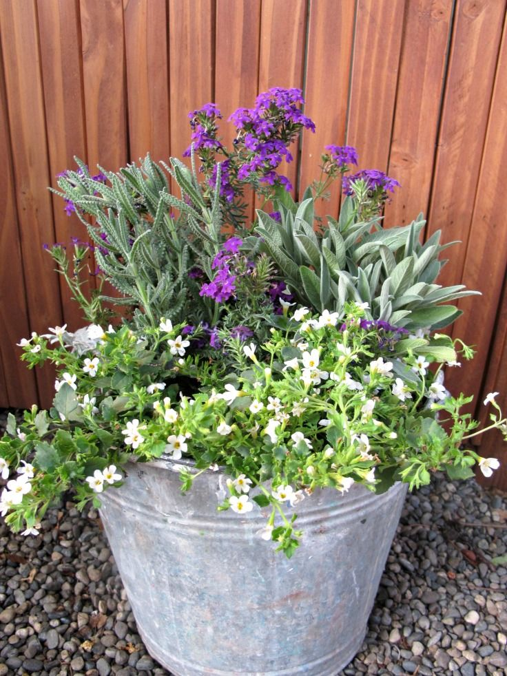 Container garden a rescue & how to