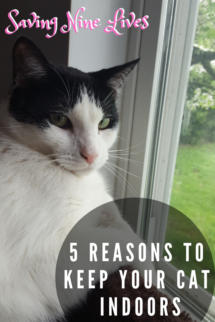 Cat Care Indoors Protect Your Cat From The Dangers Outside Learn The Reasons Why You Should Keep Your Cat Indoors Only Here Cats Outside Cat Care Indoor Cat