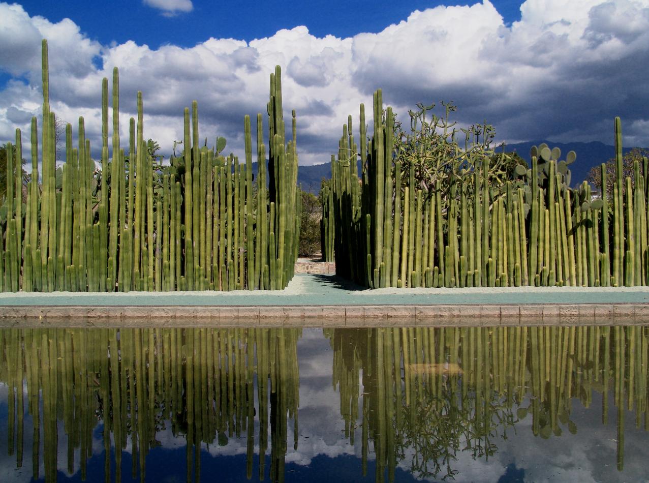 El jard n etnobot nico de oaxaca es un jard n bot nico de for Jardin etnobotanico oaxaca