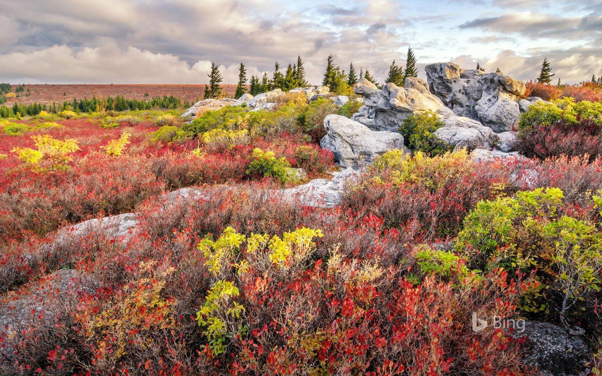 Bear Rocks Preserve in the Dolly Sods Wilderness, West