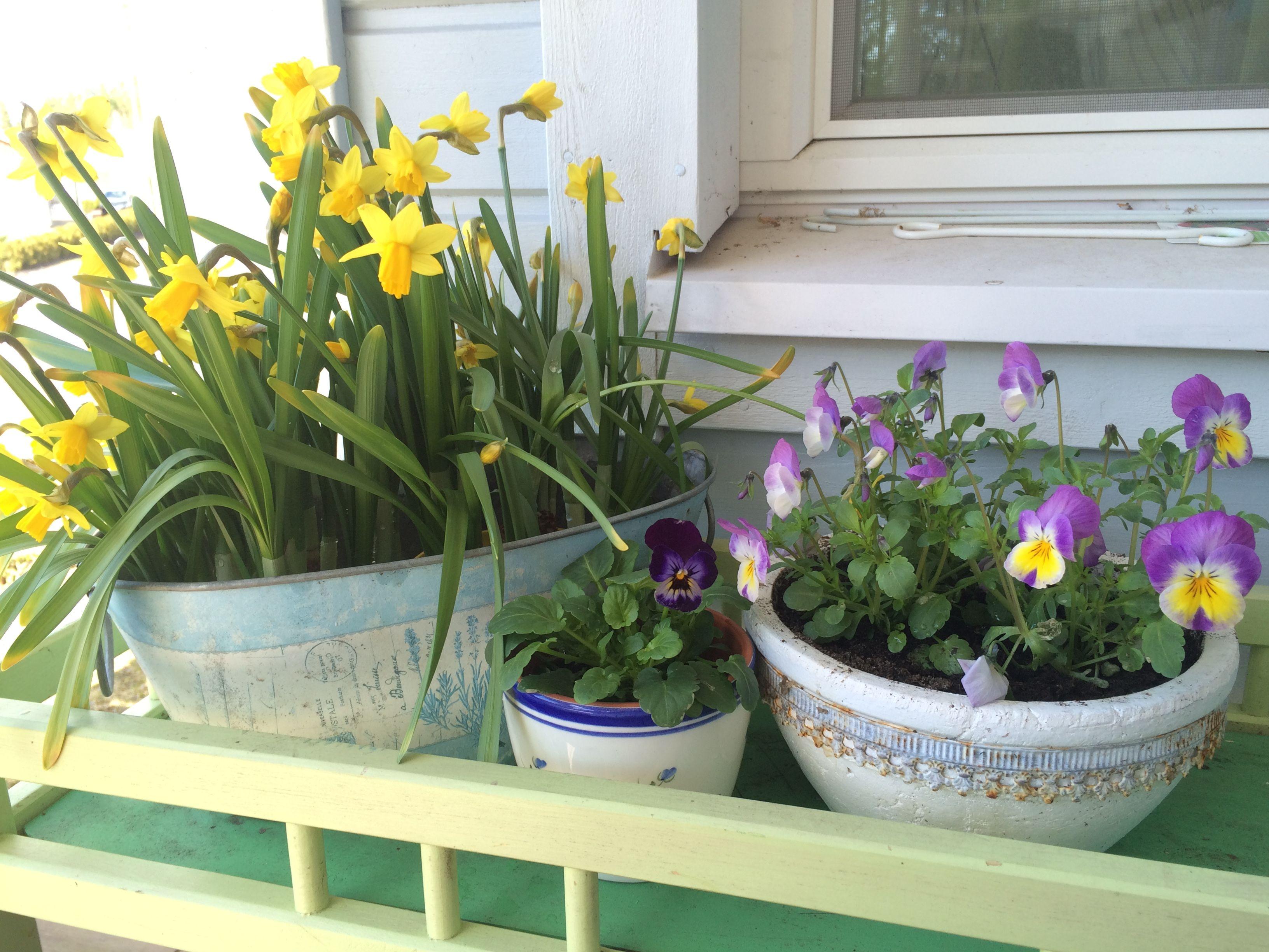 kevättä terassilla