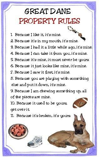 Pin By Katchin On Mostly Great Danes Pets Quotes Pomeranian