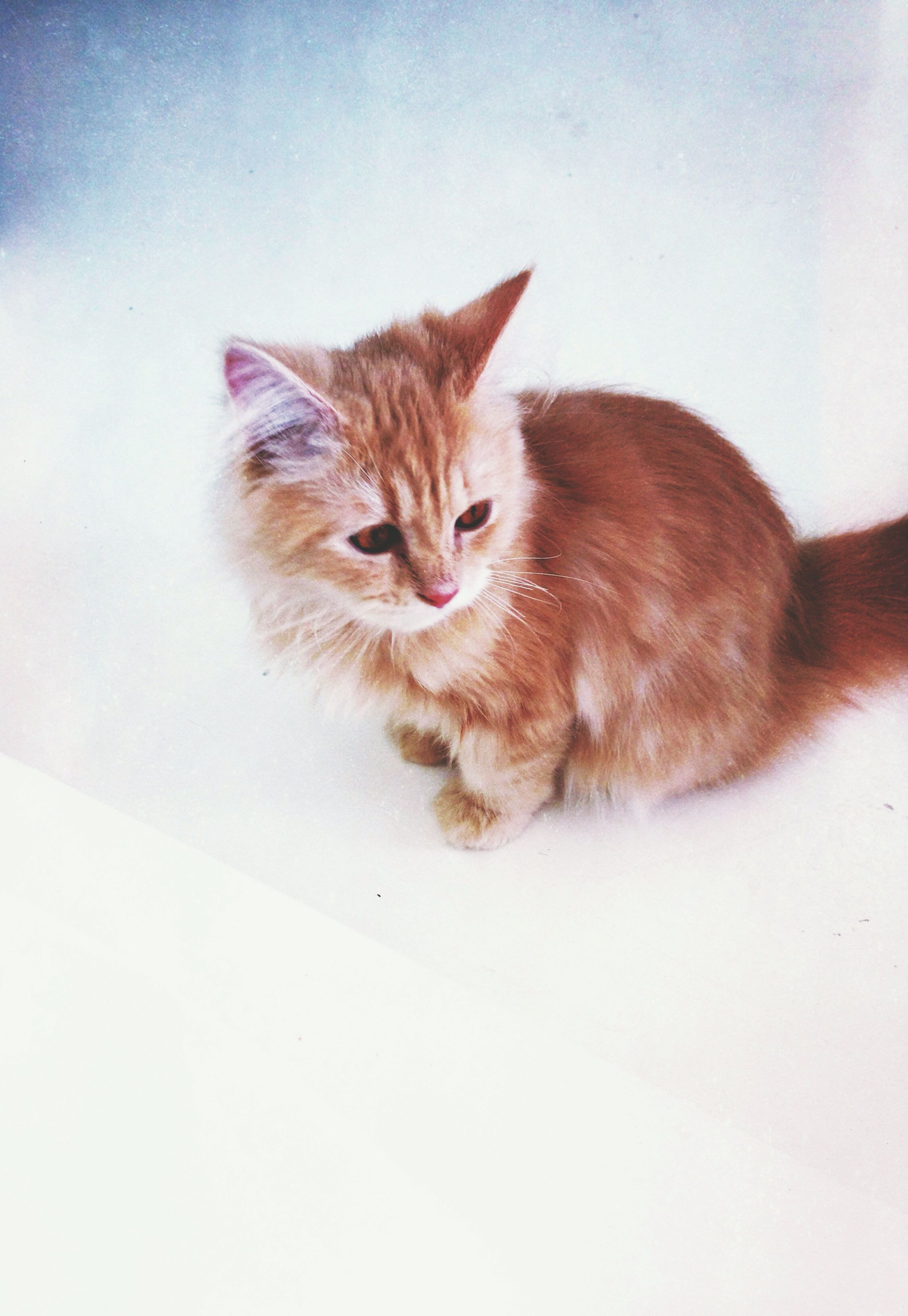 this is our 4mo old persian kitten
