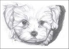 Dibujos Caras De Per Dibujos Caras De Perros Maltes Buscar Con