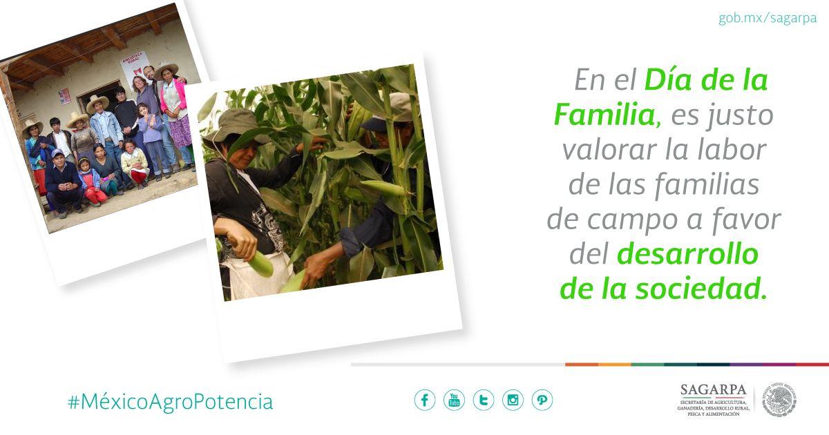 En el Día de la Familia, es justo valorar la labor de las familias de campo a favor del desarrollo de la sociedad. SAGARPA SAGARPAMX #MéxicoAgroPotencia