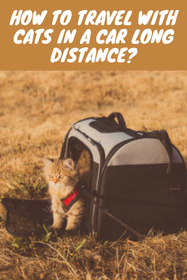 How To Travel With Cats In A Car Long Distance Cat Travel Cats Cat Leash