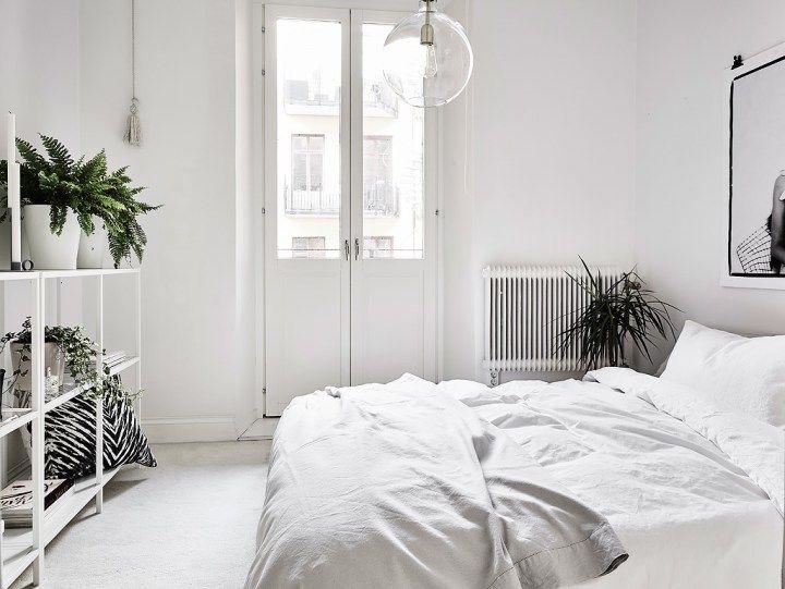 Cuartos Blancos Con Plantas