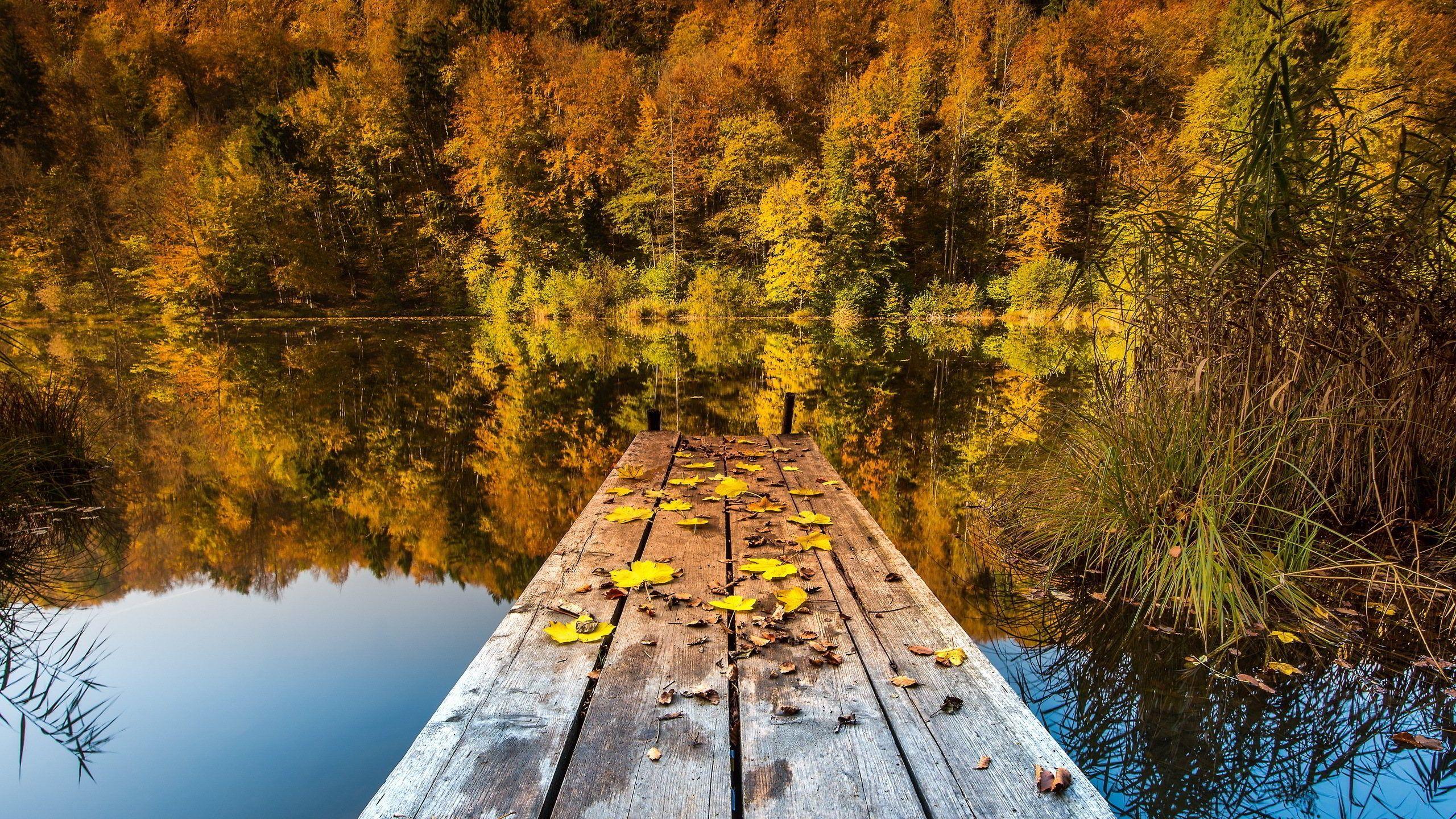 Falling Leaves Wallpaper Blackberry Autumn Lake View Autumn Lake Wallpaper In 2560x1440