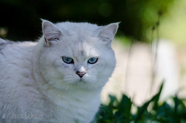 Kajalstift Katze  kitten