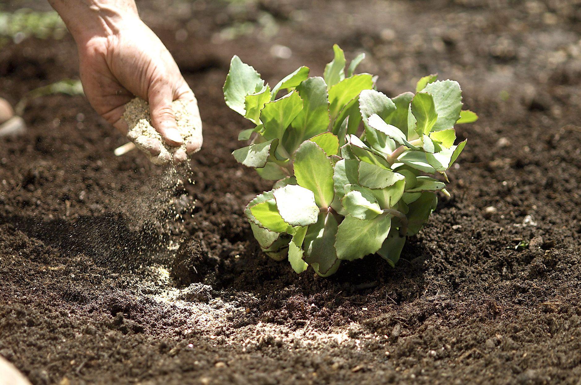 b521a8cb3604d6d4376f8f5c5798534b - Is Composted Manure Safe For Vegetable Gardens