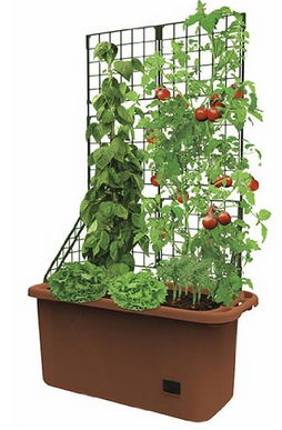 Super Gardening Containers For Any Small E Garden Hydrofarm Gctr Tomato Trellis On Wheels Urbangardens
