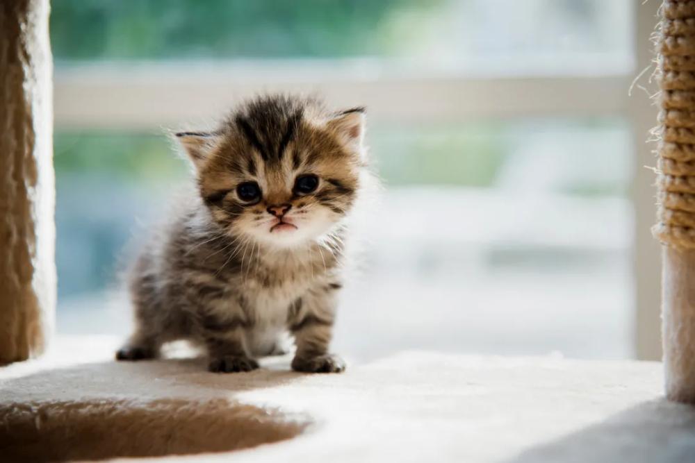 Kittens Killed Google Search Kittens Cutest Cute Animal