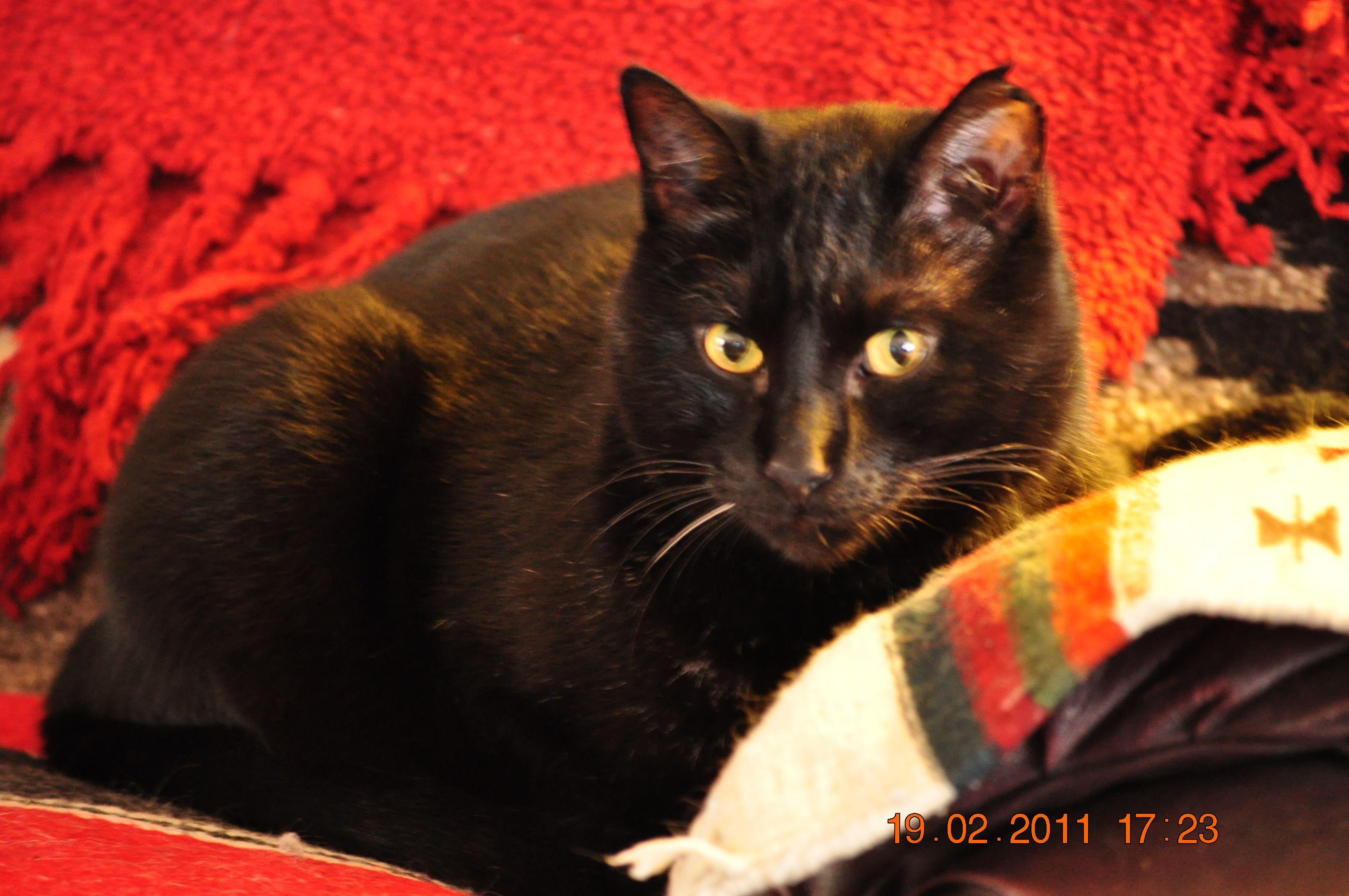 BLACK CAT PEST