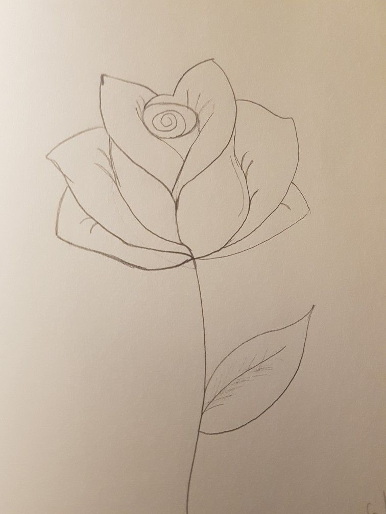 Art Rose Flower Leaf Stem Plant Pencil Drawings Doodle Easy Simple Blackpearlz Flower Line Drawings Plant Drawing Diy Canvas Art