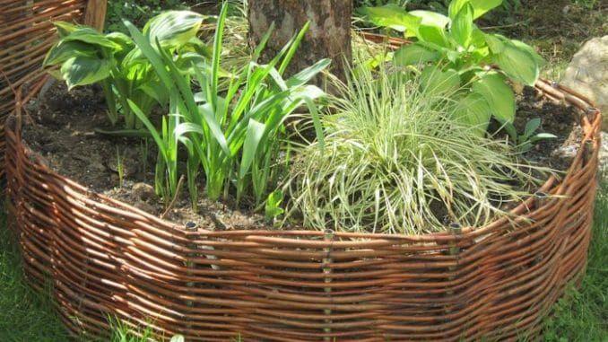 Weiden Selber Flechten Baumrondell Baum Mit Weide Umflechten Hochbeet Weiden Weiden Flechten