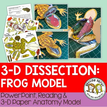 Frog Paper Dissection Scienstructable 3d Dissection Model