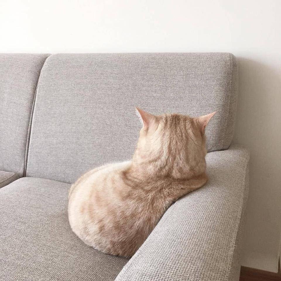 Espressività E Curiosità Dal Pianeta Gatto Gatti Espressivi E