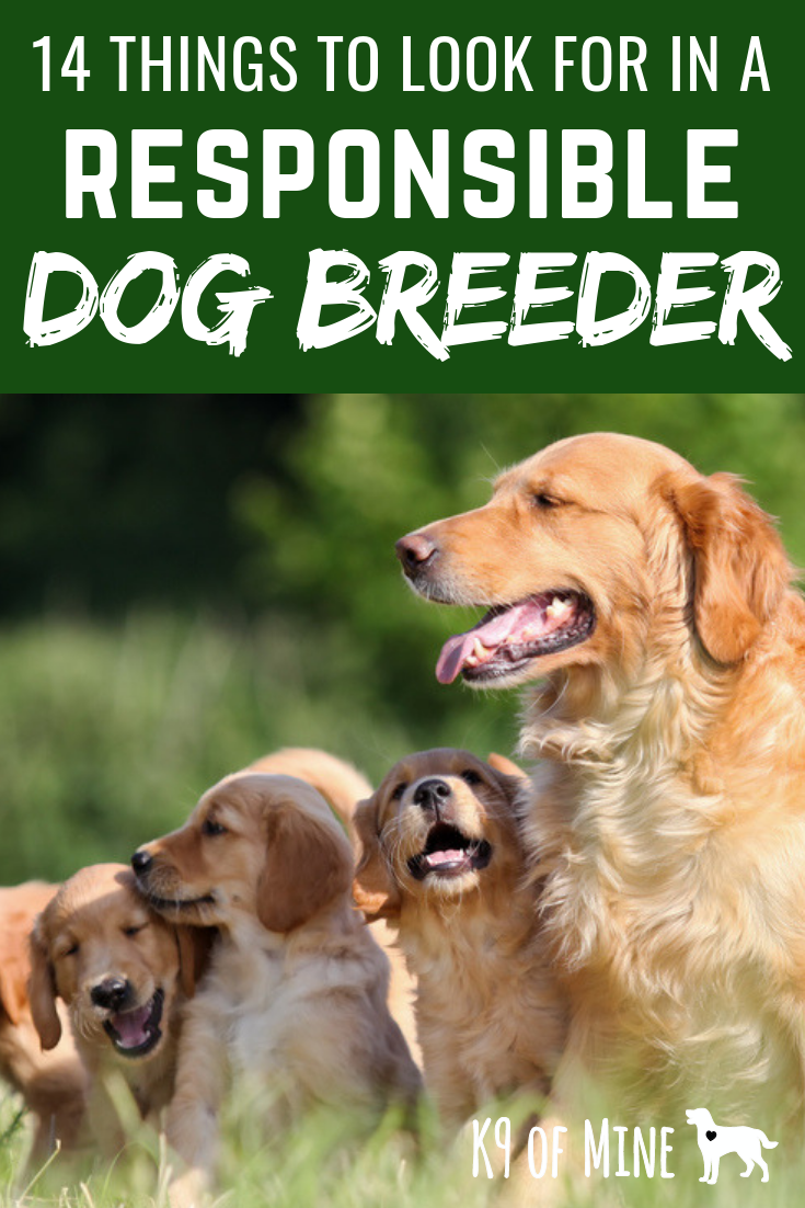 14 Criteria For Finding A Good Reputable Dog Breeder Dogs