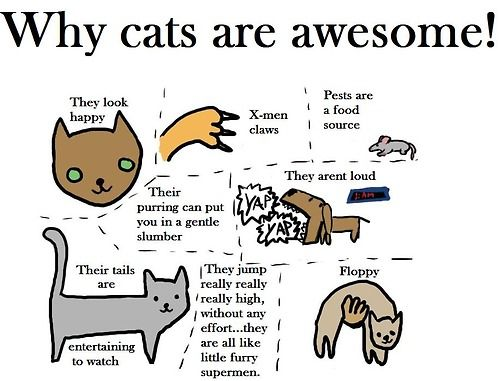 It Has Been An Awesome Year Of Reddit So Here S Something About Cats Crazy Cats I Love Cats Funny Cat Pictures