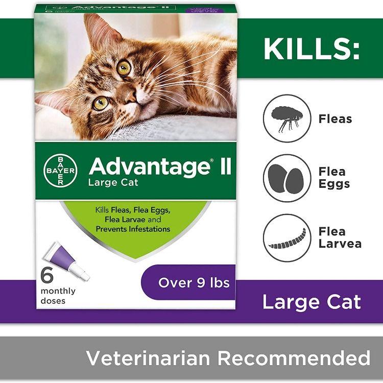 Advantage Ii In 2020 Flea Prevention For Cats Cat Fleas Cat Fleas Treatment