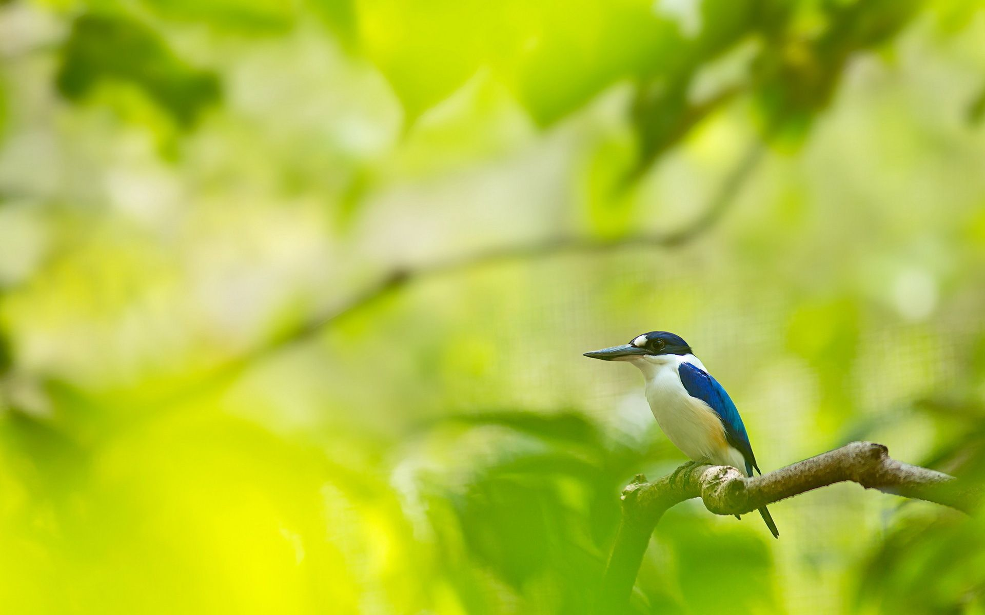 tropical blue bird hd desktop wallpaper widescreen high 1024a—768 bird pic wallpapers