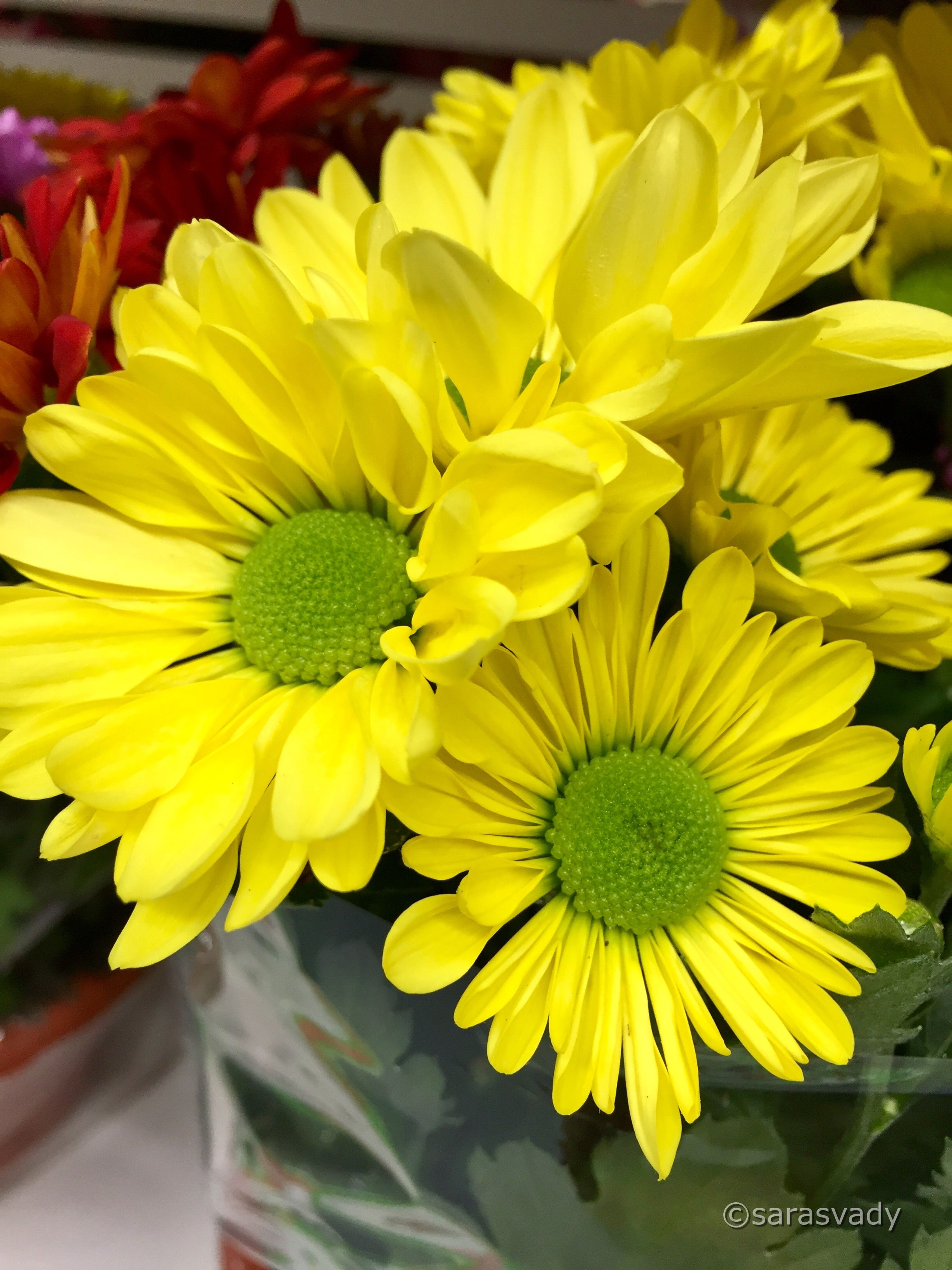 Pin by Rosa Johnson on Yellow flowers Yellow flowers