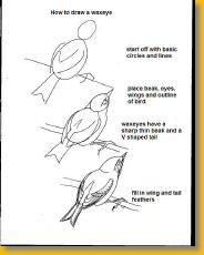 Drawing realistic Birds Step by Step | how to draw a robin ...