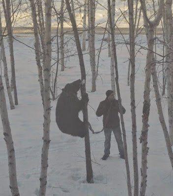 des ours dans les villes en russie 4   Des ours dans les villes en Russie   ville russie photo ours image