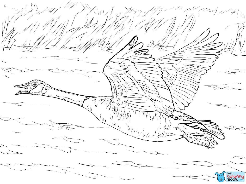 Pin On Bird Coloring Pages
