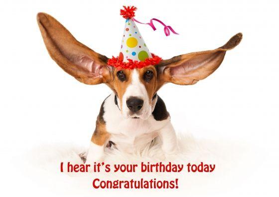 gefeliciteerd kaart met hond