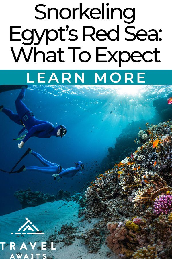 Snorkeling Egypt's Red Sea: What To Expect From This