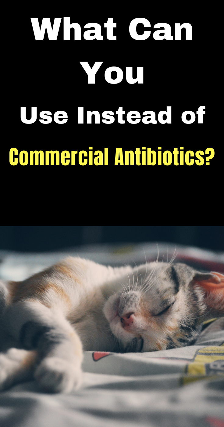 What Can You Use Instead of Commercial Antibiotics? When