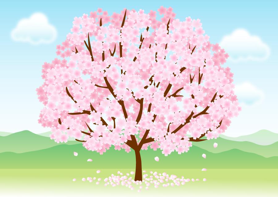 フリーイラスト 満開の桜の木のある風景 Pattern 桜の木 桜 絵