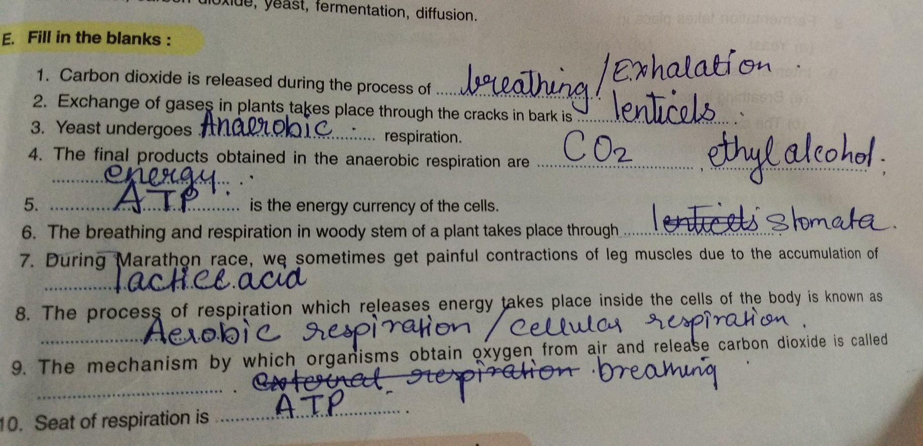 respiration #textbookobjectiveanswers #grade7 #icse #biology  #respirationobjectives   Biology worksheet [ 902 x 1866 Pixel ]