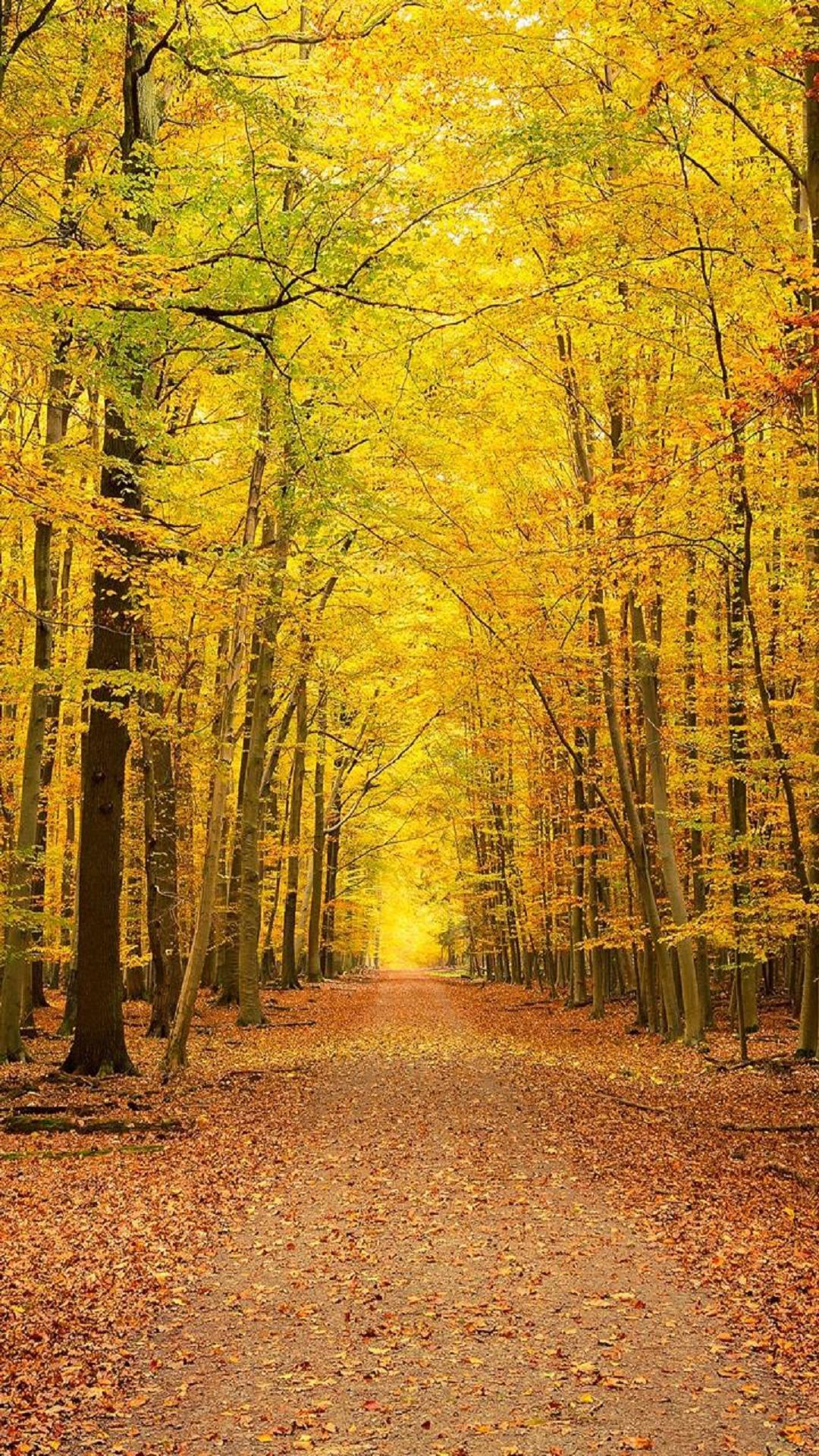 Yellow Autumn Forest Trees Phone Wallpaper HD Autumn
