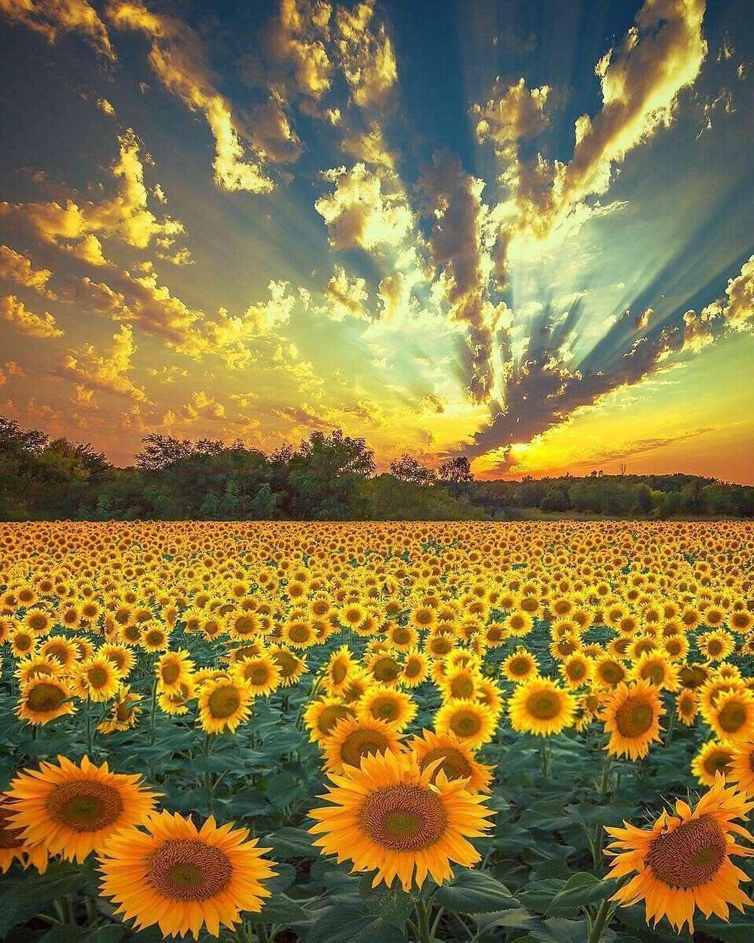 25 Inspirational Landscape Photo S Of April 2019 Nature Photography Nature Sunflower Season