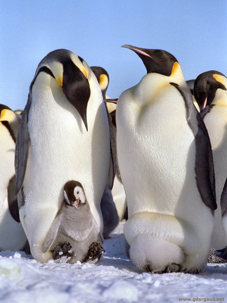 15 Amazing Animals That Start With The Letter E Pinguins Dieren Foto S Dieren