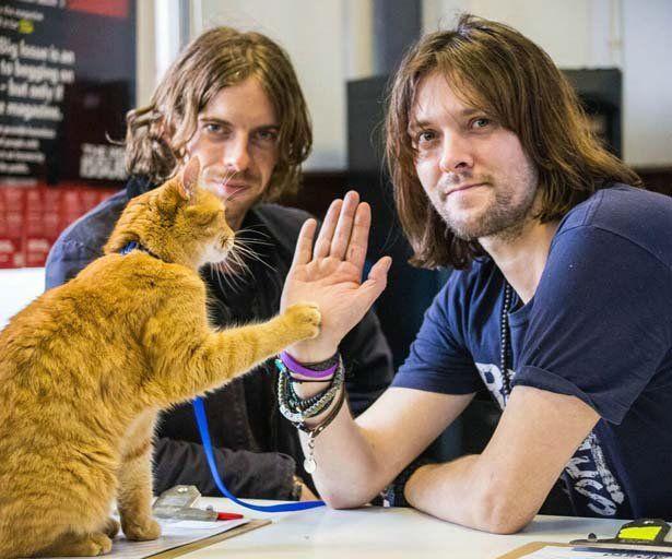 Bob Der Streuner Der Susseste Trailer Des Jahres Klatsch Tratsch De Street Cat Bob Cats Serious Cat