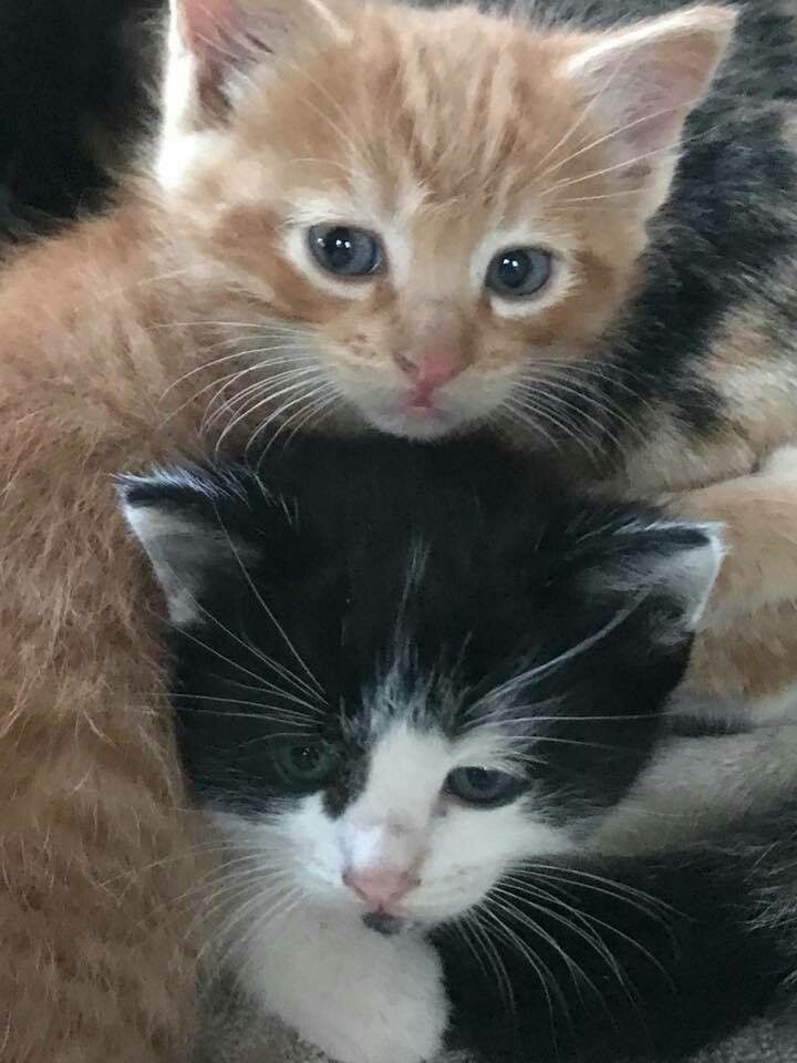 Awe... so cute... Cats and kittens, Cute animals