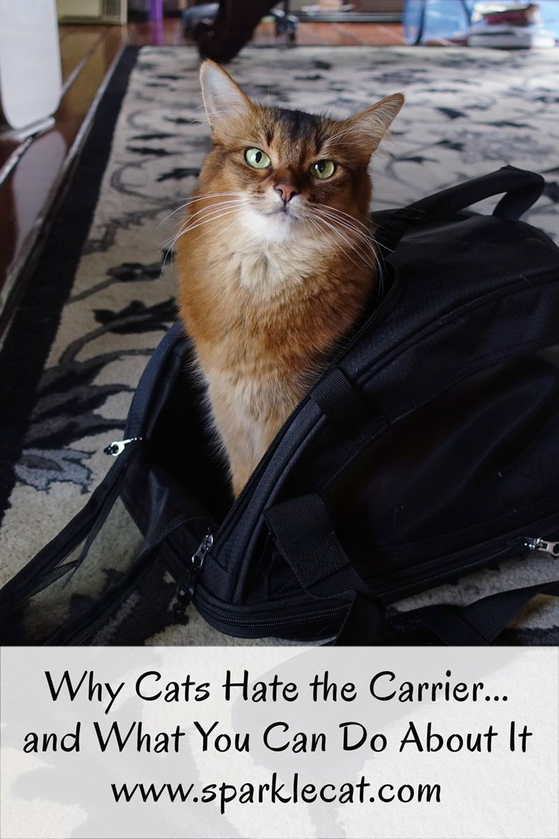 Do you have a problem getting your cat in the carrier