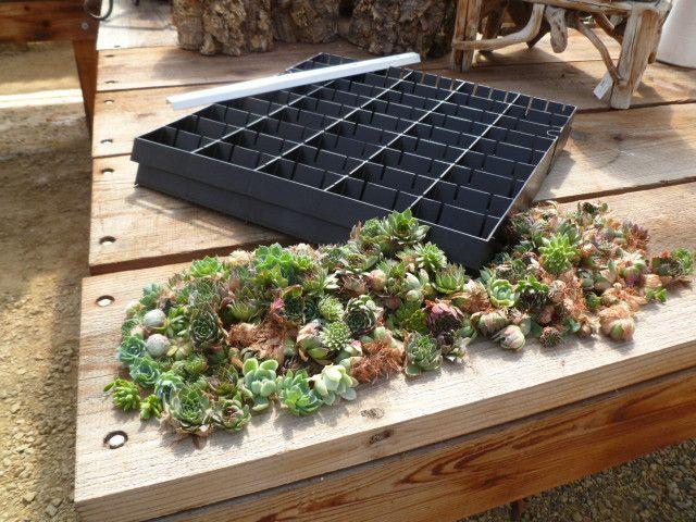 Modular Living Wall Panel Kit Wall Planter Vertical Succulent Gardens Vertical Garden
